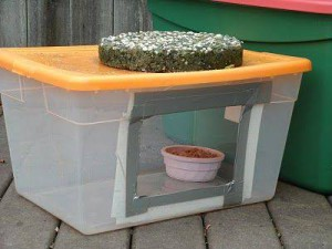 Cheap Food To Feed Feral Cats